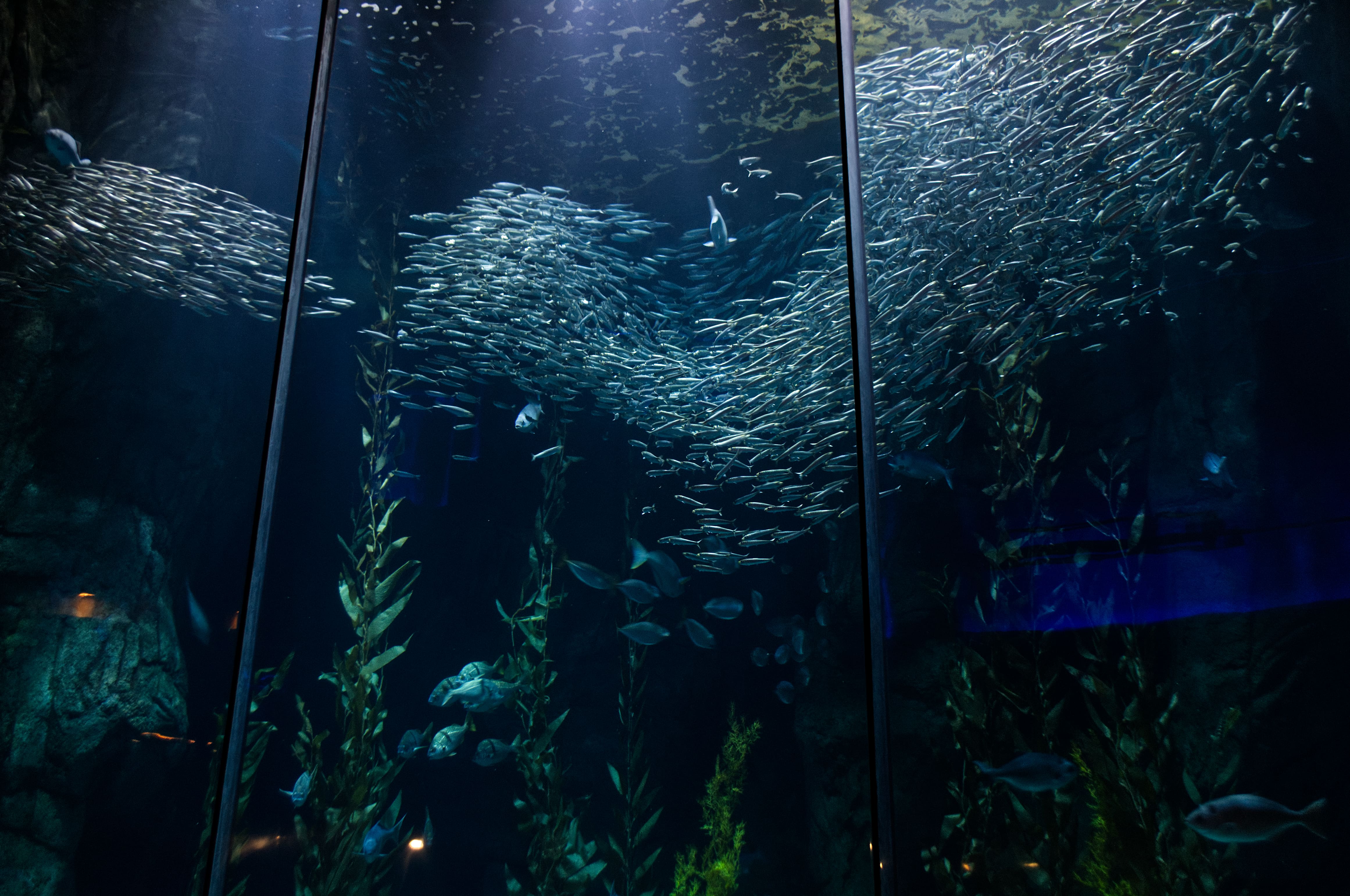 Exhibit on the first level of the Aquarium of the Pacific