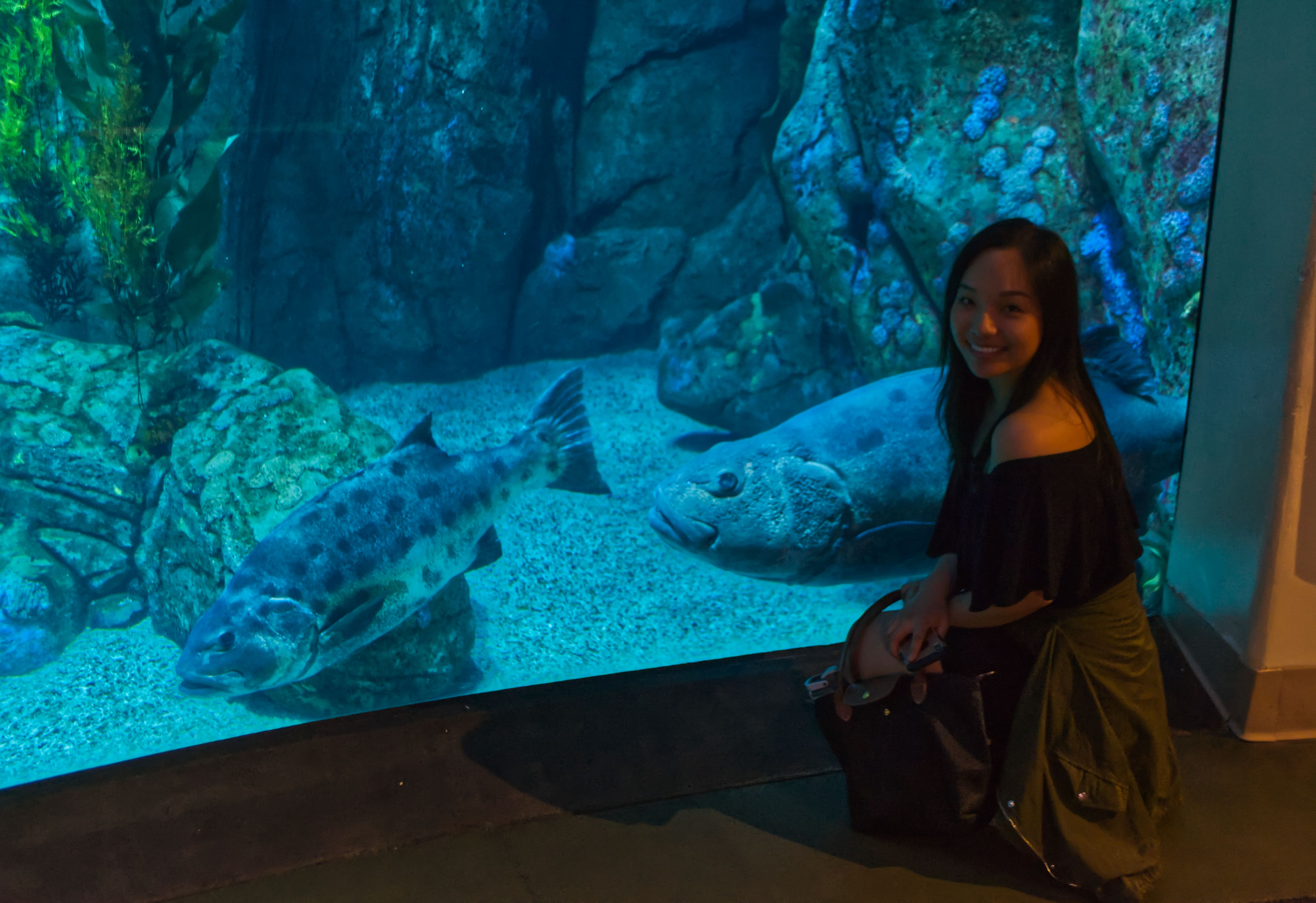 Significantly bigger fish at the Aquarium of the Pacific